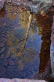 Tree Reflection - Wilson Canyon - Sedona, Arizona