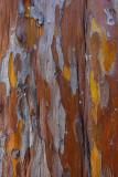 Cypress Bark - Wilson Canyon - Sedona, Arizona