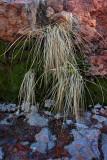 Grasses in Bank - Wilson Canyon - Sedona, Arizona