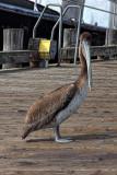 Fellow Traveler - Morro Bay, California