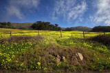 Wild Flowers - Ragged Point, California