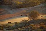 Rural Scene - San Luis Obispo County, California