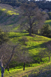 Oak and Orchard - Adelaide Road - Paso Robles, California