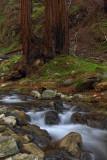 Redwoods and Stream - Limekiln State Park - California