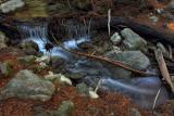 Debris - Limekiln State Park - California