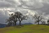 Oaks on Hill - Paso Robles, California