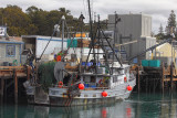 South Bay Unloading Fish - Morro Bay, California