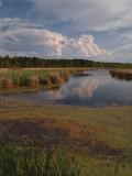 Black River Marsh - Wisconsin