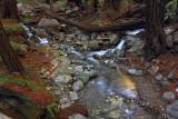 Creeks Come Together - Limekiln State Park - California