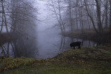 Yossarian Contemplating the Beauty of a Foggy Morn