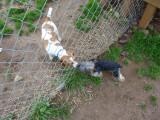 dogpark 015 (Copy).JPG