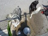 dogpark 018 (Copy).JPG