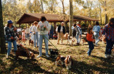 Basset Hound picnic