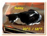 Blackie sun Tuesday.jpg