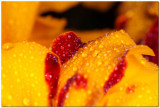 Marigold 3760.