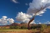 Arboretus Cumulus
