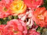 Mrs. Crews' Roses
