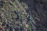 Kilauea Point National Wildlife Reserve