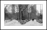 Madison Park, New York