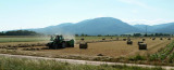 De la route, en Alsace