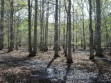 Bottomland Hardwood Forest