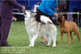 Display Dog Competition