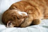 Monty  Sleeping beauty