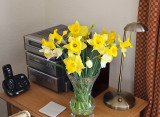 Daffs 4 March 2012
