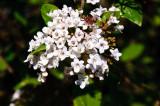 Blossom in the garden