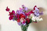 Sweet peas from the garden