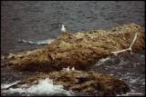 seagulls (i)