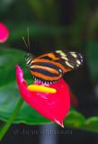 Couleurs de Papillons - Butterfly  2011
