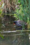 wetland4-sk.jpg
