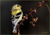 Yellowpointer copy.jpg