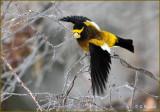 Flight Of The Bumblebird .-)