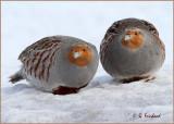 Partridge pear....I  mean pair
