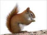 Hilda Squirrel