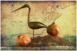 pomegranate and the sacred ibis