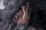 Left Hair