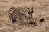Cheetah Conservation Fund, Namibia  2007