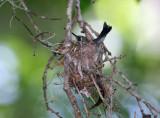 Bird on Nest 2