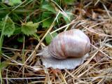 :: Snails ::