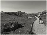 Alpine Meadow Trail
