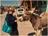 Martina feeding burro's