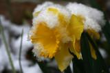 Winter goodbye, hello spring