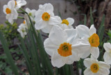 It's spring in my garden.