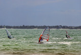 The windsurfers  started reaching the shore...