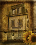 The house of sunflowers....