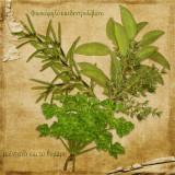 Sweet Herbs