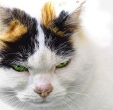 Portrait of an old,  very temperamental lady-cat